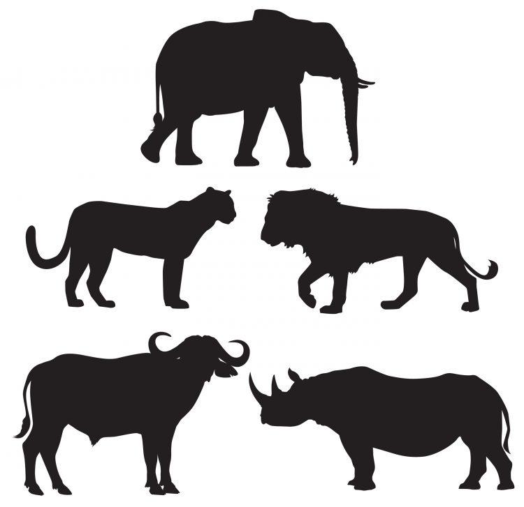 de-5-store-dyrene-2