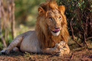 nyati-safari-no-dyrebeskyttelsen-kristiansand-no